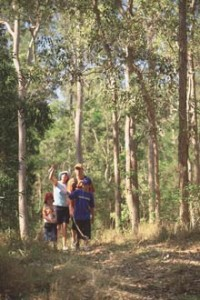 Bushwalking Near Imbil
