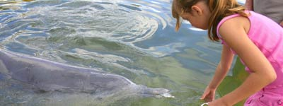 Hand Feed Dolphins at Tin Can Bay